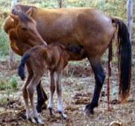DESARROLLO DEL EMBRIÓN -ANIMALES VIVÍPAROS