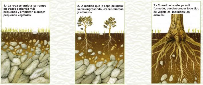 Elblocdel7 el suelo como se forma for Como se forma y desarrolla el suelo